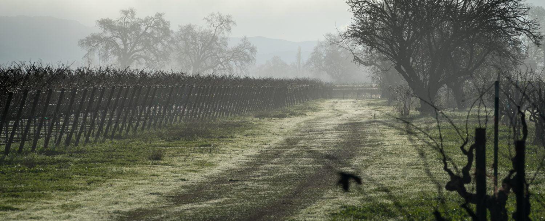 haunted vineyard at Regal Vineyards
